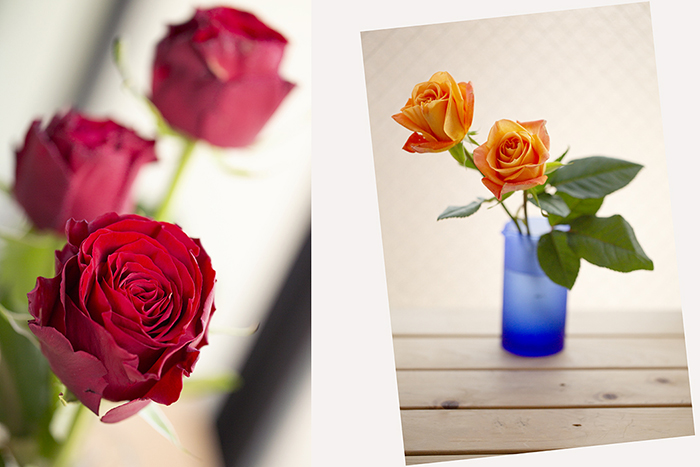 2_2556_rose.jpg