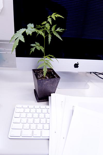 40262_office.jpg