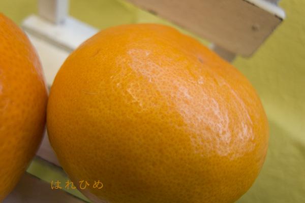 42061_はれひめ.jpg