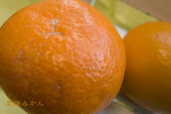 42062_愛媛.jpg