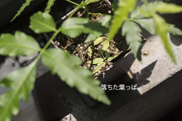 4644_leaf.jpg