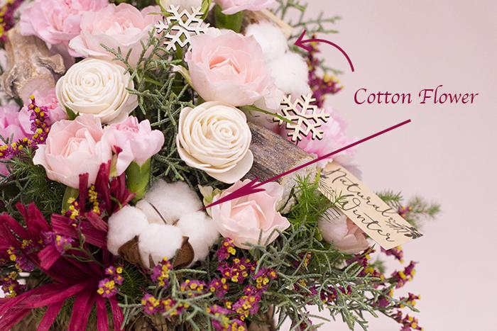 _8922_cotton.jpg