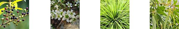 herb_new.jpg