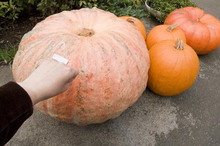 かぼちゃ21365.jpg