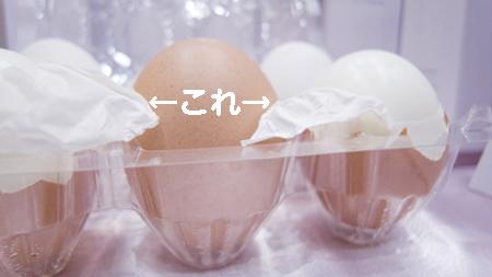 卵殻膜&卵15971のコピー.jpg