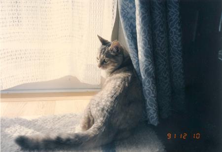 窓際で.jpg