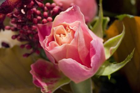 薔薇21392.jpg