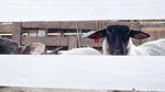 R0021207羊さん.jpg