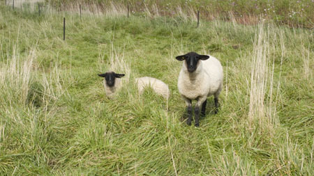 R0021210羊.jpg