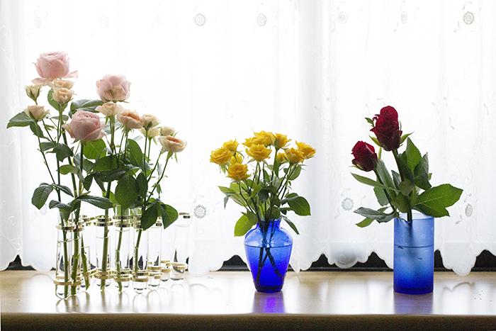 rose_3310.jpg
