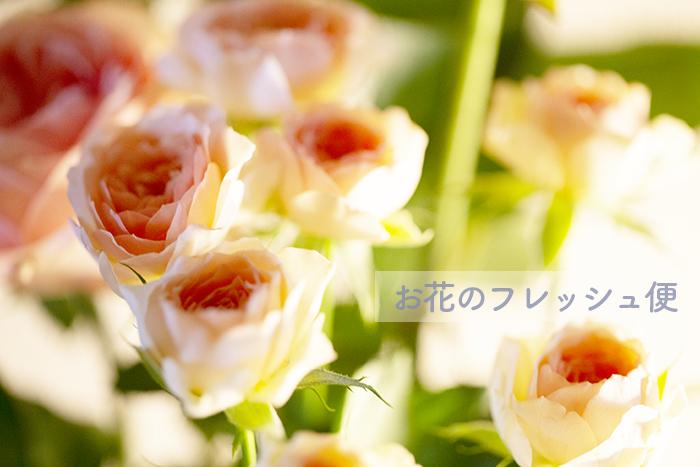 top_3323.jpg